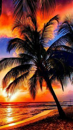 Comprar Moda redutor IndoorOutdoor Capacho - Sandy Tropical Paradise Beach com palmeiras eo Oceano mar por Edully Beautiful Sunrise, Beautiful Beaches, Beautiful Landscapes, Beautiful Images, Beautiful People, The Beach, Sunset Beach, Beach Scenery, Hawaii Beach