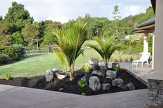 Chatham Island Nikau's, local rock and structural under planting used to ground new deck. Designed and implemented by Fusion Landscape Design. Palm Garden, Tropical Garden, Tropical Plants, Garden Plants, Home And Garden, House Plants, Outdoor Areas, Outdoor Stuff, Outdoor Decor