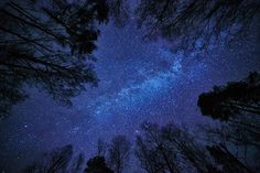 Night sky with the Milky Way over the forest and trees surroundi - Deep bNight sky with the Milky Way over the forest and trees surrounding the scene.