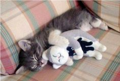 Just having a nap with my favourite toy……
