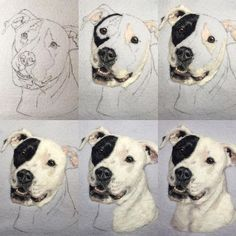 Progression of the piece I posted yesterday. I love how he seems to pop off the background. Needle Felted Animals, Felt Animals, Bargello Quilts, Felt Pictures, Needle Felting Tutorials, Felt Dogs, Felt Material, Dog Paintings, Wet Felting