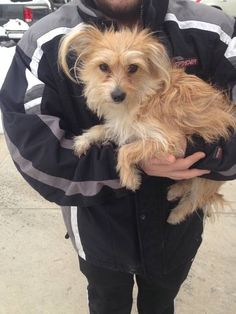 Found Dog Mixed Breed in WOODSIDE, NY - Lost My Doggie
