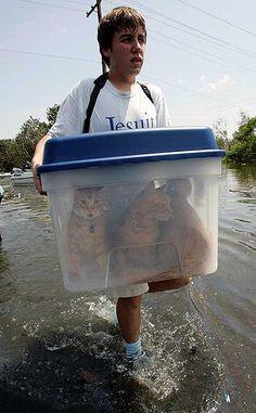 Save the kitties!