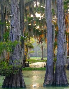 The largest cypress forest in the world at Caddo Lake, Texas/Louisiana, USA (by dave_hensley). Paddle through a primeval-feeling forest at Caddo Lake State Park in east Texas. Lakes In Louisiana, Louisiana Bayou, Shreveport Louisiana, Belle Image Nature, Beautiful World, Beautiful Places, Beautiful Forest, Oh The Places You'll Go, Places To Travel