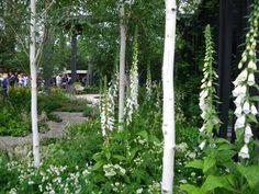 White Garden Plant Suggestions.  Via The Vancouver Sun Blog.