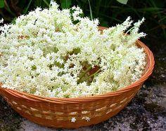 baza cierna liek ktory chuti Serving Bowls, Herbs, Tableware, Food, Gardening, Fitness, Dinnerware, Tablewares, Essen