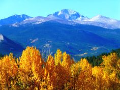 The Golden Aspens Were Gorgeous With Longs Peak In RMNP! « Estes ...