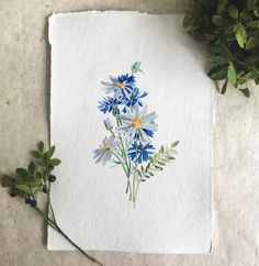 wild posy - chamomile and cornflowers