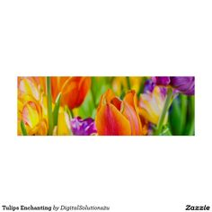 Tulips Enchanting Poster