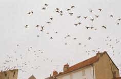 by sssbf, via Flickr