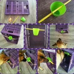 Diy dog brain game