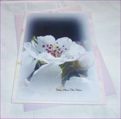 """Carte double 10,5x15cm réalisée à partir d'une photo de fleurs de poirier """" Fleurs de poirier"""" : Cartes par celinephotosartnature"""