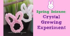 Growing crystals with borax...super easy, cool science experiments for kids. Use a pipe cleaner in any shape, lower it into the borax mixture. Crystals form within