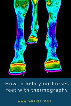 what is veterinary thermography and why can help horses dogs and animals Thermal Energy, Work With Animals, Horses And Dogs, Human Eye, Things To Know, Pet Care, Dog Cat, Therapy, Heat Energy