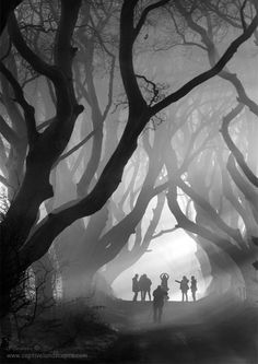 The Hedges.. The Dark Hedges, County Antrim, N Ireland.