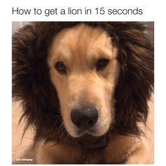 Video by insta:jadenthekingsley 🎥 Cute Animal Memes, Animal Jokes, Cute Animal Pictures, Cute Funny Dogs, Cute Funny Animals, Dog Memes, Memes Humor, Cute Little Animals, Funny Animal Videos