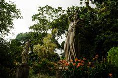 Botanical garden, Rio de Janeiro - Brasil.