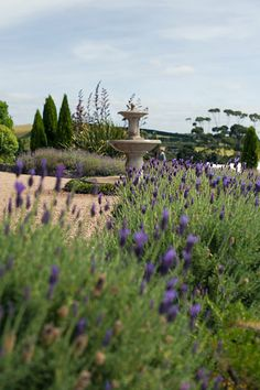 Photo from Giles and Kelly collection by Captured by Keryn www.capturedbykeryn.com lavendar Hill Waiheke Island