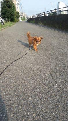 Hinata taking a walk