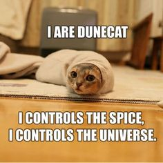 I am normally resistant to cat photos, but this...it is irresistible. Plus, I mean, Dune.