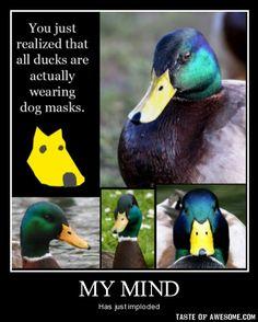 Ducks Wear Dog Masks!