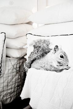 Squirrel-cushion. Cute one. ❥