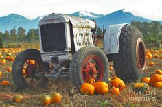 Google Image Result for http://images.fineartamerica.com/images-medium-large/old-tractor-in-the-pumpkin-patch-randy-harris.jpg