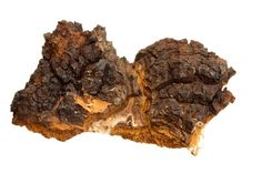 Chaga: The Cancer Healer and King of All Herbs | Spirituality & Health Magazine| Page 1