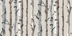 Nordik Wood (31051) - Albany Wallpapers - A simple silver birch tree design with tree trunks giving a stripe effect.  Perfect, for a contemporary  Scandinavian look. Shown in the silver grey and white on stone.  Please request sample for true colour match.