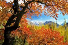hunza valley - Hledat Googlem