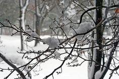 """http://pinterest.com/pin/create/button/?url=http://fineartamerica.com/featured/april-snow-kay-novy.html=http://fineartamerica.com/images-medium-5/april-snow-kay-novy.jpg    """"April Snow"""" by Kay novy.  http://kay-novy.artistwebsites.com/"""