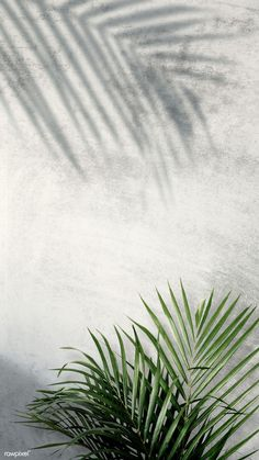 design wallpaper Areca palm shadows on a gray wall Leaves Wallpaper Iphone, Plant Wallpaper, Pastel Wallpaper, Aesthetic Iphone Wallpaper, Screen Wallpaper, Aesthetic Wallpapers, Wallpaper Backgrounds, Backgrounds Free, Palm Background