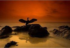 Bird on rock