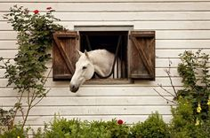 I want so badly to have windows/shutters in my stalls... this new place would…