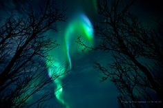 Aurora and trees.