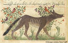Bestiary, Wolf in right profile; in background, birds in flowering plants. - The Morgan Library & Museum
