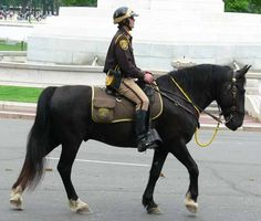 Might be a mounted patrol horse instead of a Police horse. The saddle blanket has bags sewn on.