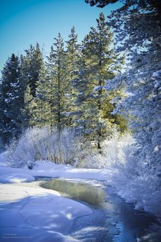 "novice-at-play: ""A Winter Morning Stroll "" Winter Magic, Winter Snow, Winter Blue, Winter Schnee, Snow Photography, Photo D Art, Snow Scenes, Winter Photos, Winter Beauty"
