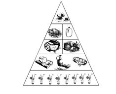 Pyramid Of Food Coloring Pages - Download & Print Online Coloring Pages for Free | Color Nimbus Food Coloring Pages, Online Coloring Pages, Free Coloring, Coloring Sheets, Food Pyramid, Colour Images, Colouring Sheets, Coloring Book