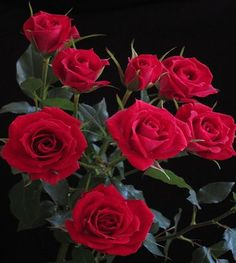 Amar é lidar com os espinhos de quem ama por inteiro: com força, não com fraqueza. (Lya Luft)
