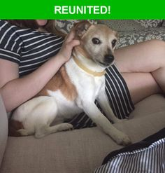 Great news! Happy to report that Lana has been reunited and is now home safe and sound! :)