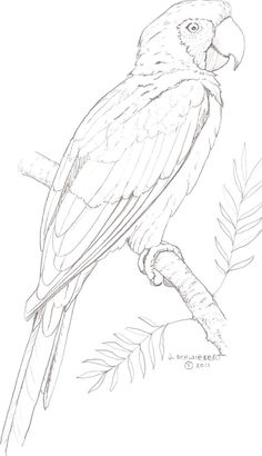 Painting Bird Coloring Pages 67 Ideas Pencil Art Drawings, Bird Drawings, Art Drawings Sketches, Animal Drawings, Drawing Animals, Realistic Drawings, Parrot Drawing, Parrot Painting, Silk Painting