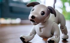 Man's best robot friend is back again. The brand new and improved #Sony_Aibo is more lovable than ever before. With advanced… #Gadgets