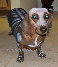 I can't understand why my mom's dachshund ran and hid when I showed her this picture.......