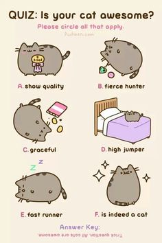 123 best images about Pusheen my buttons on Pinterest
