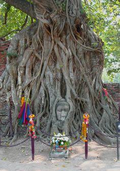 Bäume/Wälder The tree roots of a Bohdi Tree at Wat Mahathat in Ayutthaya, Thailand. The temple was c Ayutthaya Thailand, Zen, Unique Trees, Tree Roots, Trendy Tree, Tree Bark, Ancient Art, Mystic, Photos