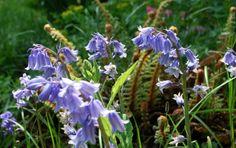 Schmetterlinge am Heliotropium Plants, Plant, Planets