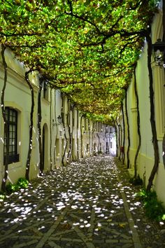 20 of the most beautiful streets in the world Jerez de la Frontera: Andalusia, Spain. Beautiful Streets, Beautiful World, Beautiful Places, Beautiful Gardens, Beautiful Pictures, Landscape Architecture, Landscape Design, Beautiful Architecture, Residential Architecture