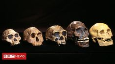 'Ghost' human ancestor discovered in West Africa Mysterious archaic hominins may have interbred with early humans in West Africa, scientists say. Honolulu Hawaii, Bbc News, Evil Angel, Empire Romain, Dna Genealogy, Matter Science, Early Humans, Human Evolution, West Africa