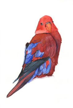 Parrot Painting P036 Print of watercolor painting by Splodgepodge
